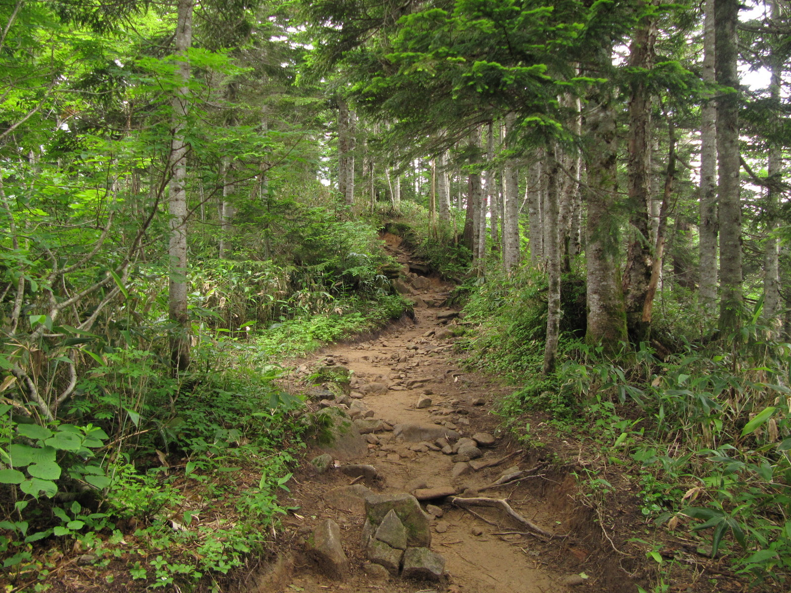 Image Gallery mountain trail